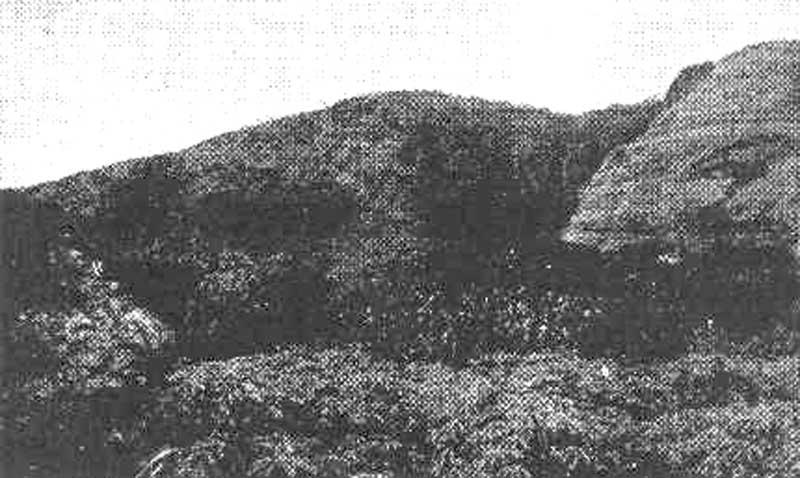 Ilots reliques de forêt dense équatoriale du mont Benna